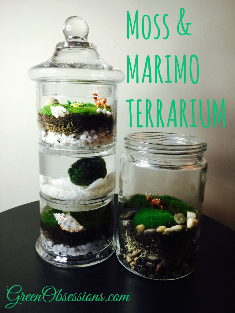 Moss Terrarium Follow Up Opened Or Closed That Is The Question Green Obsessions