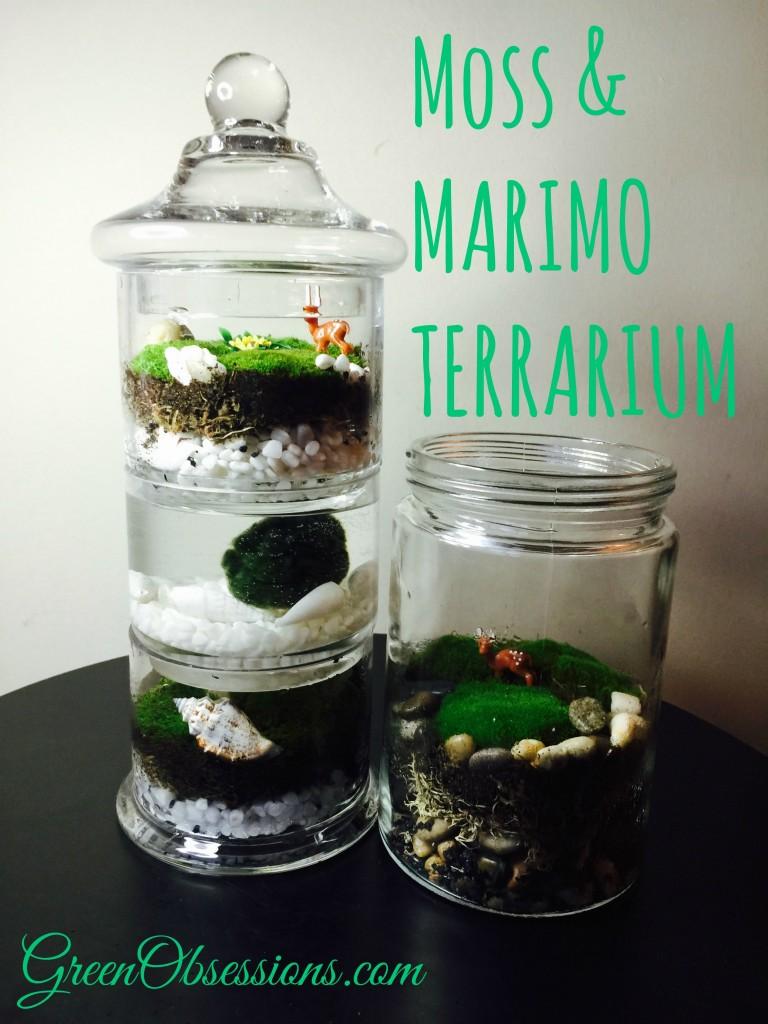 2 terrariums