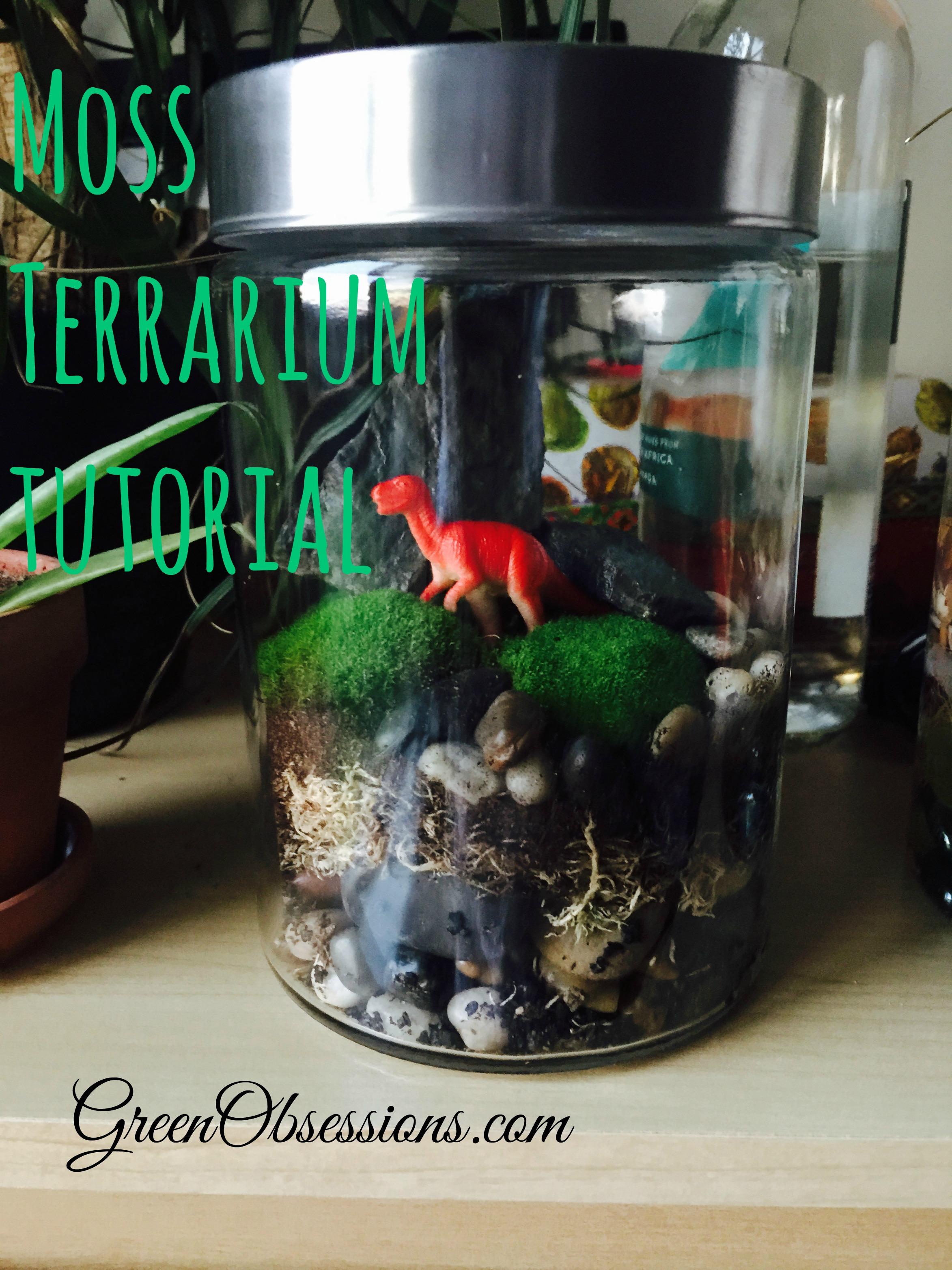 moss-terrarium