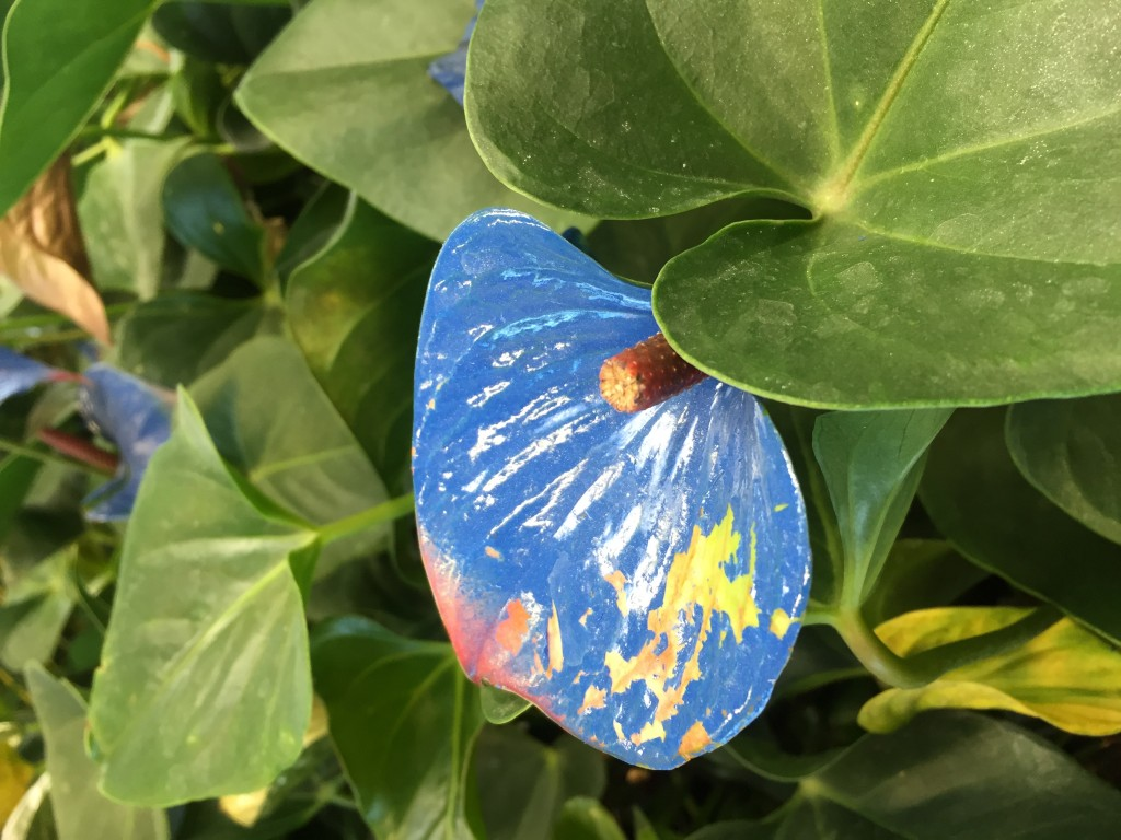 spray painted anthuriums