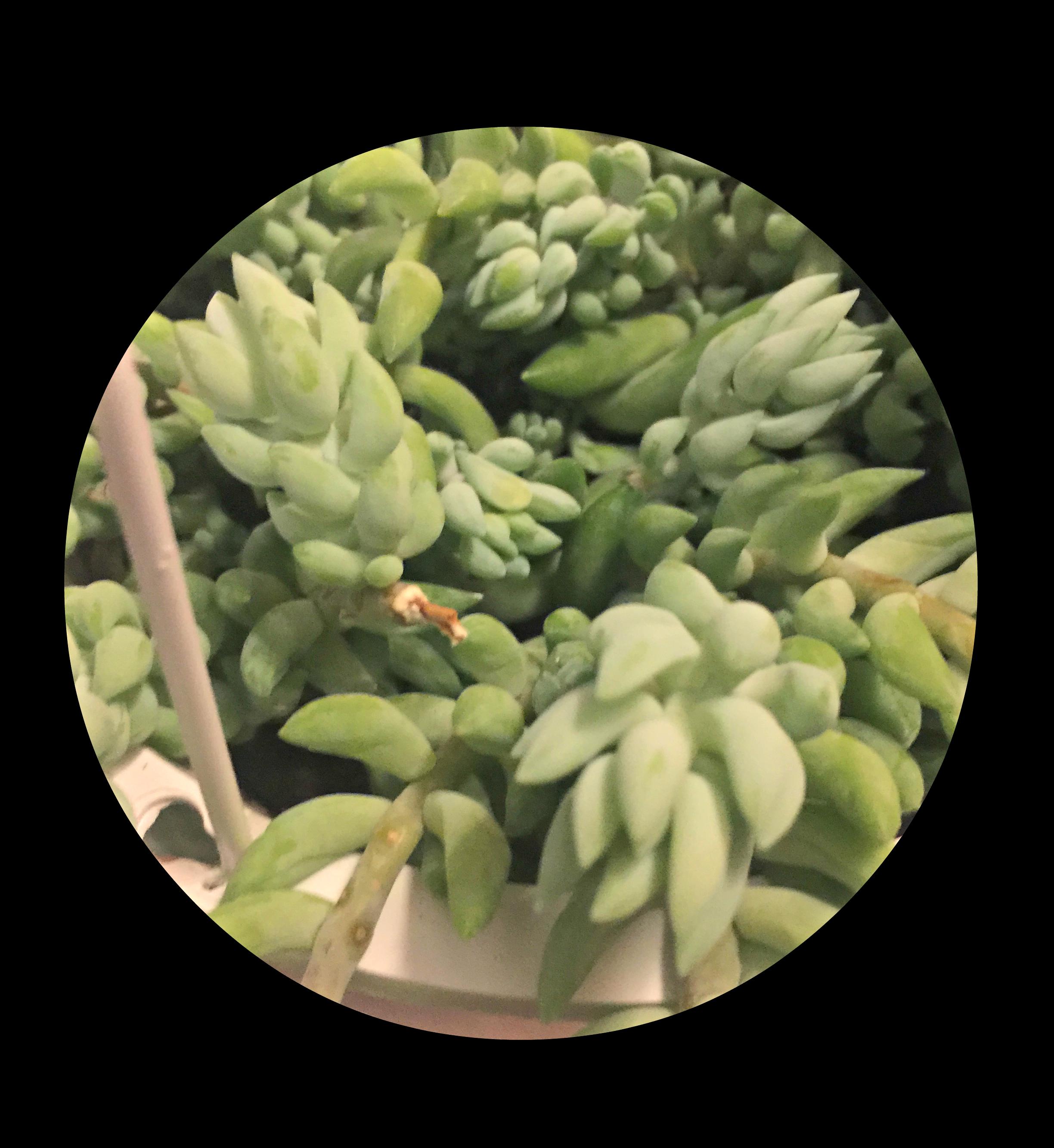 100 Plants That Need Very Little Sunlight 92 Best