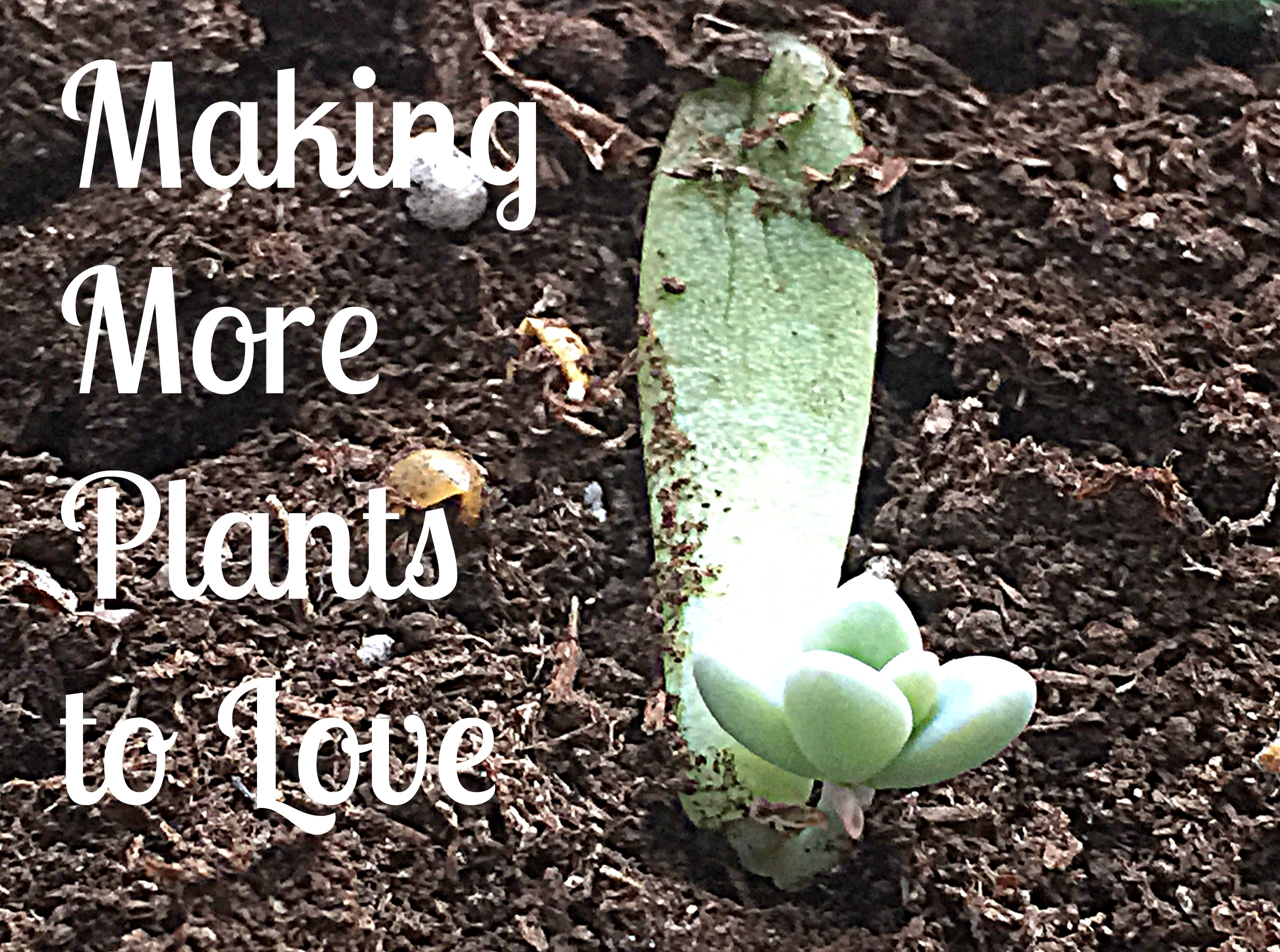 Making More Plants To Love Propagation By Leaves Green Obsessions