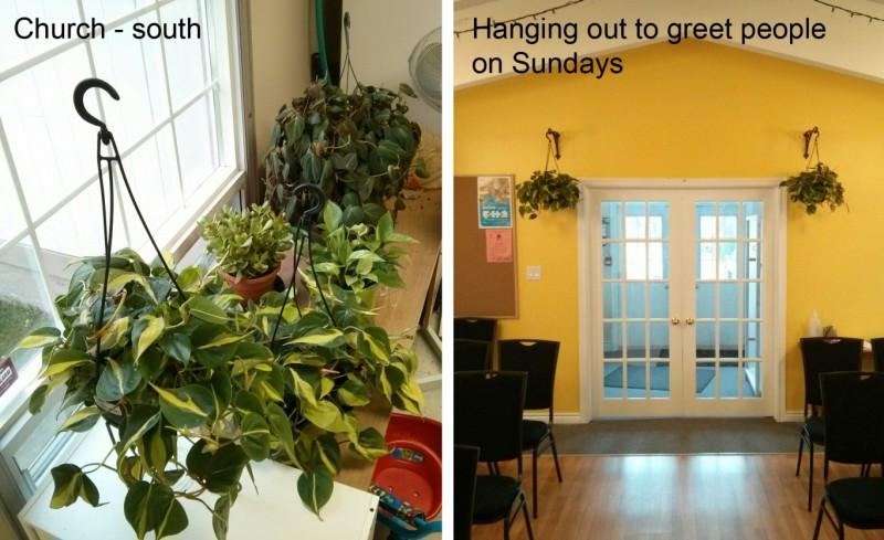 Plants at Church
