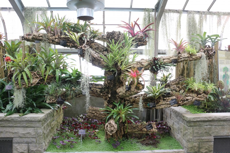 Tillandsia Room