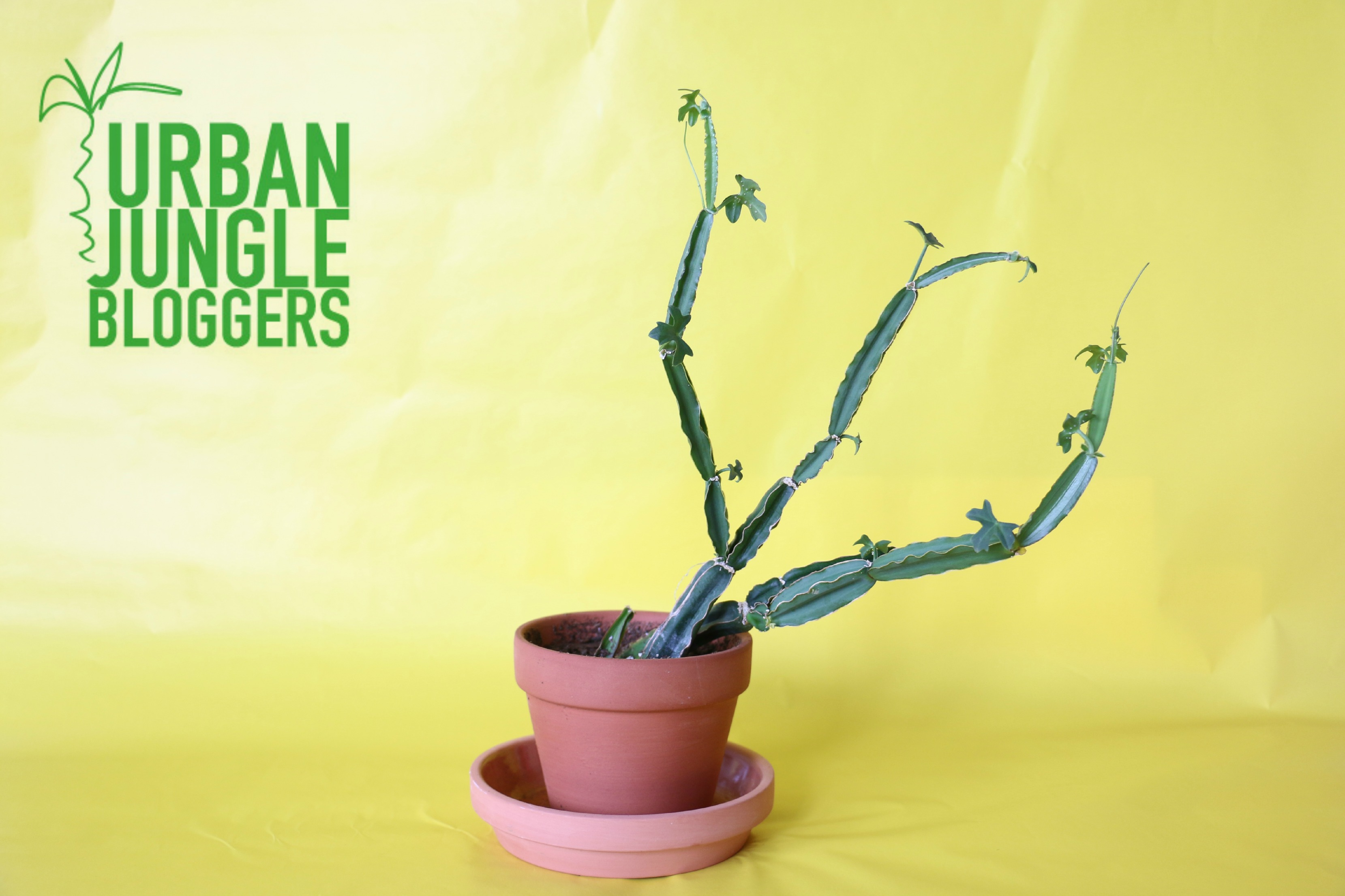 Urban Jungle Bloggers| Make Your Plant Pop