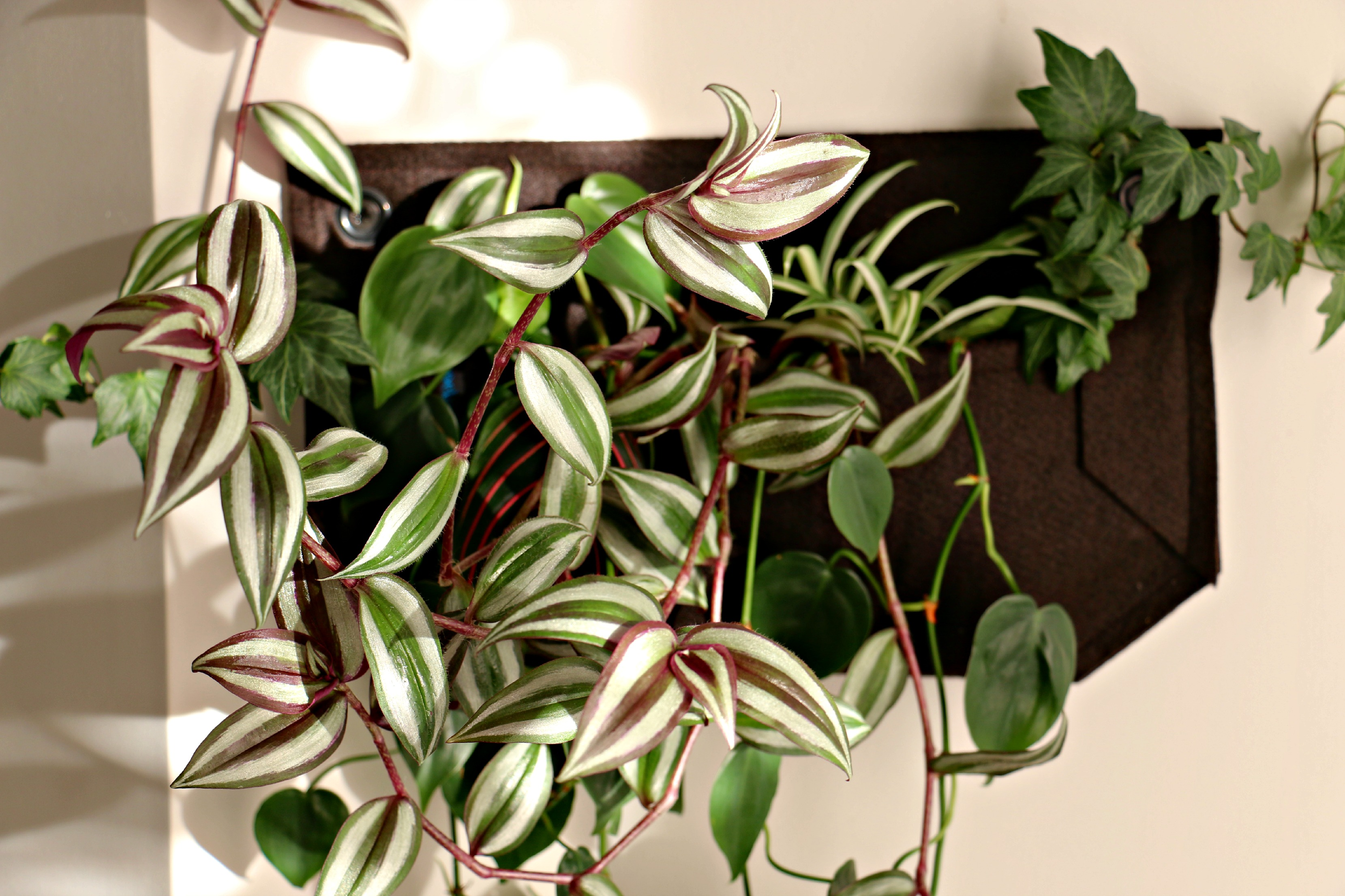 Product Review: Vertical Planters|Woolly Pocket Living Walls