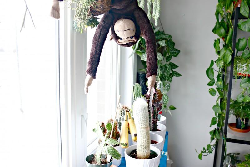 bananamonkey