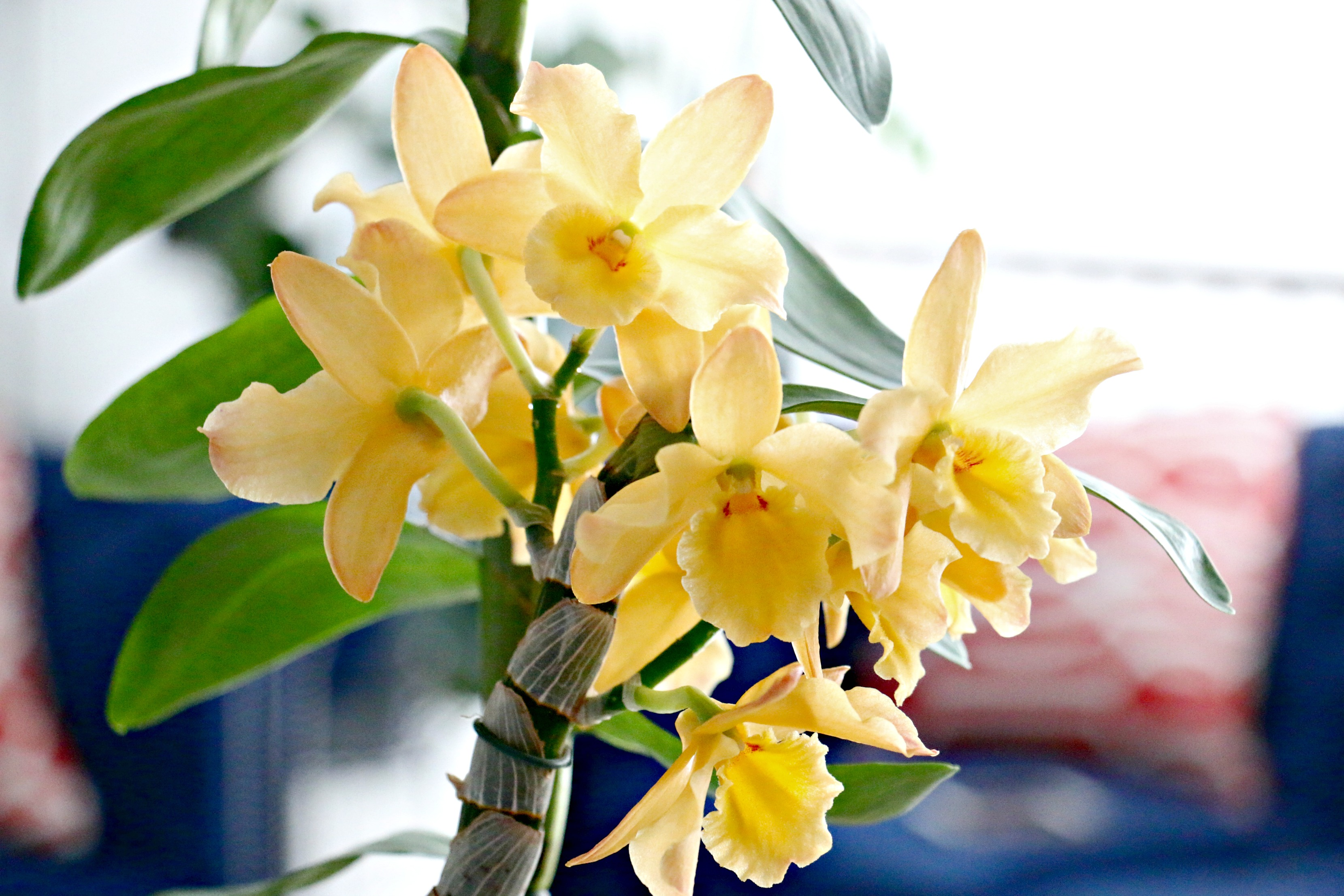 Have You Ever Been Confused By The Diffe Types Of Orchids Well I It Is One Plant Can T Seem To Really Identify Properly