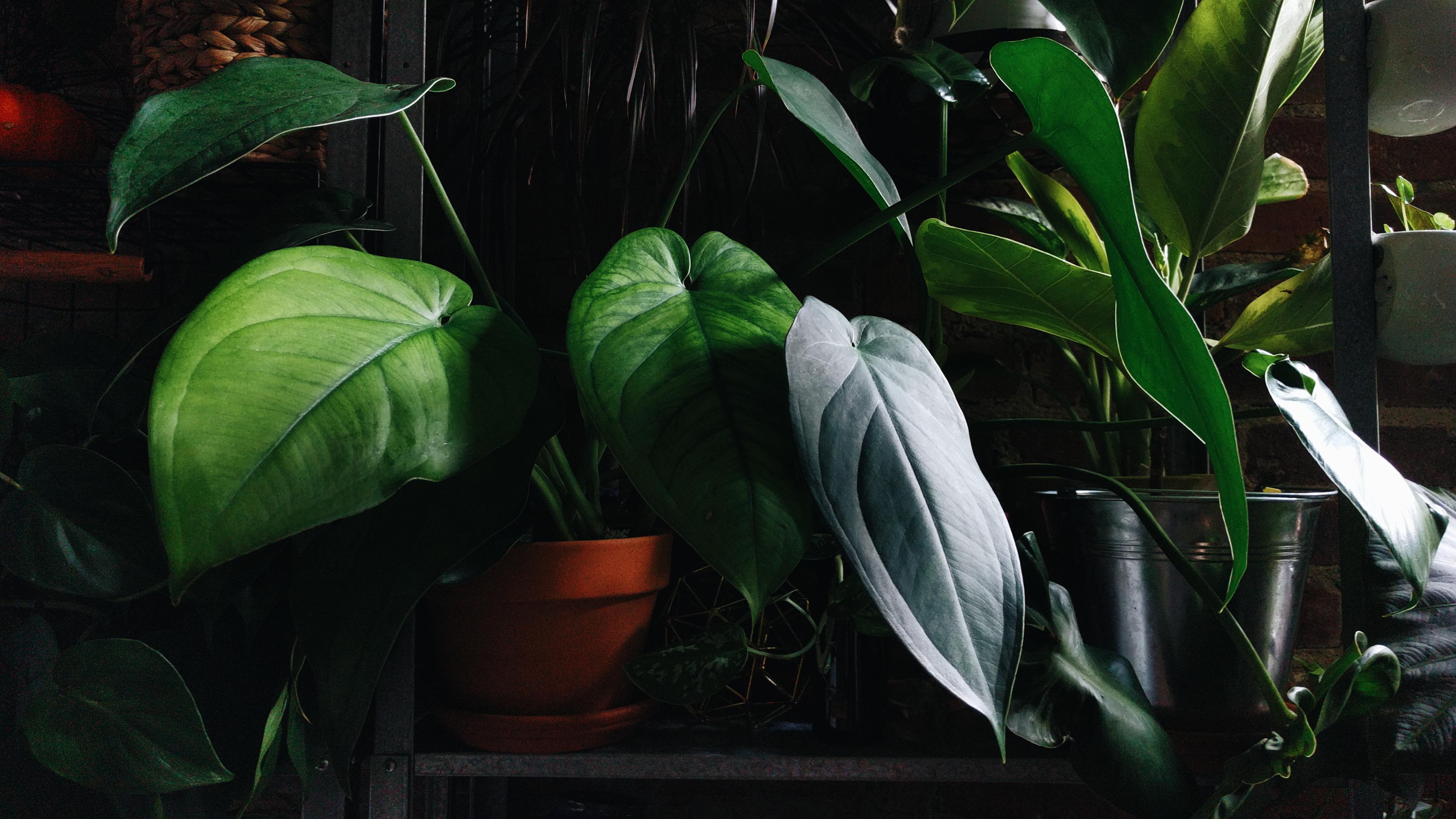 the-plants-at-olenas-new-york-city