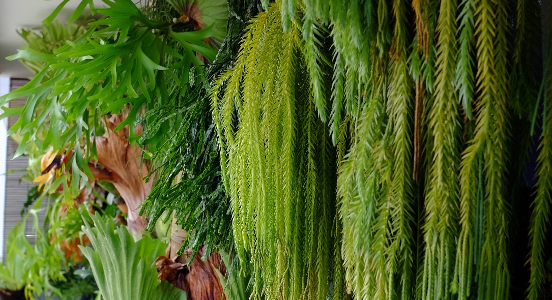 the-plants-at-yaps-singapore