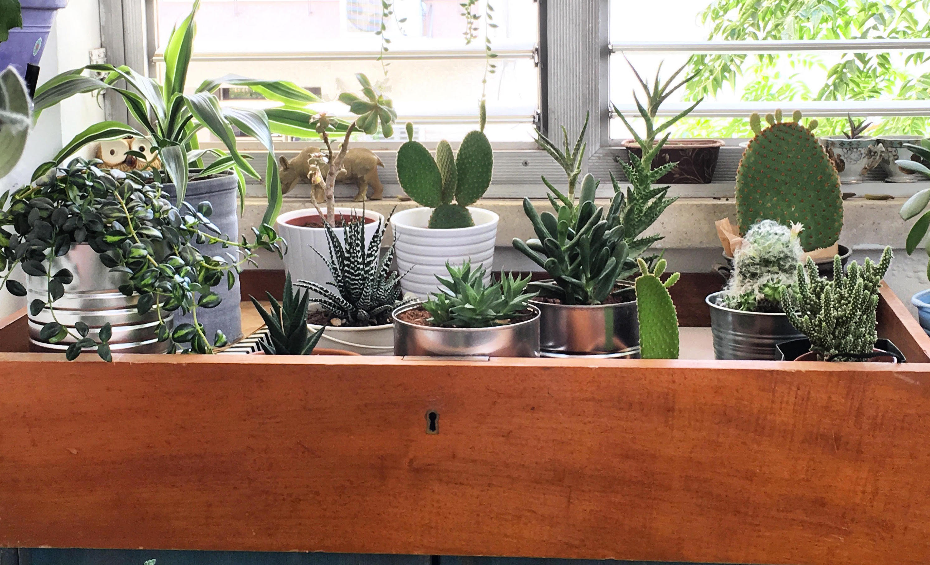 the-plants-at-natalys-israel