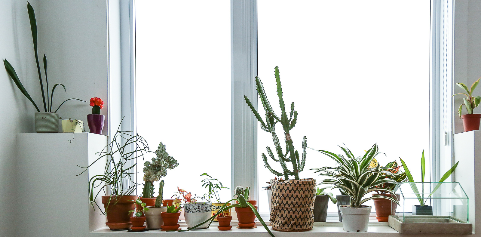 the-plants-at-jonathans