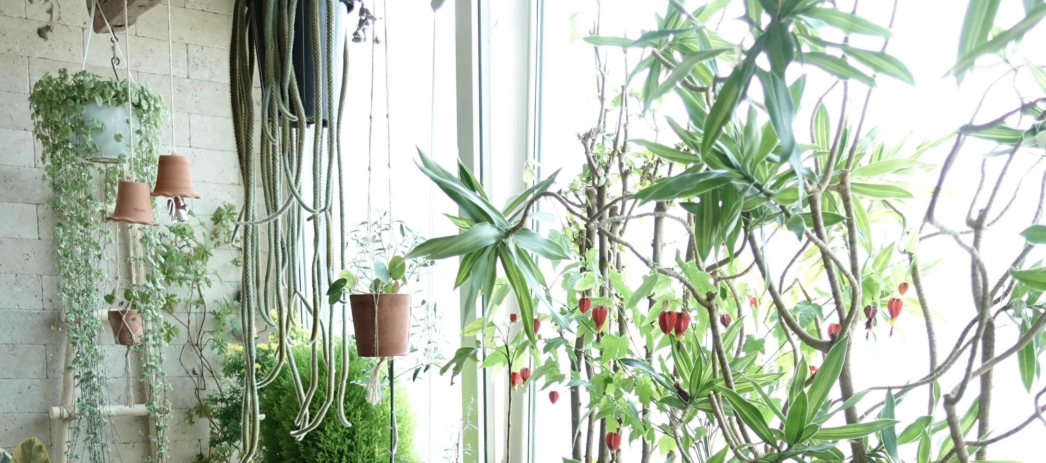 the-plants-at-jinhwas