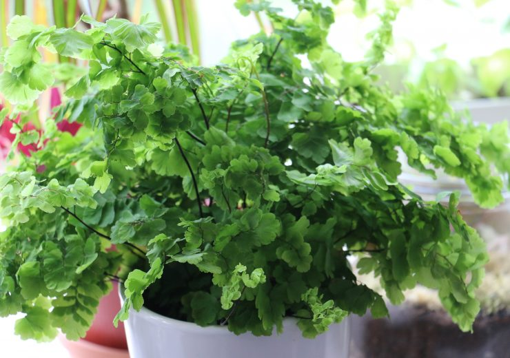 ways-to-raise-humidity-for-your-plants