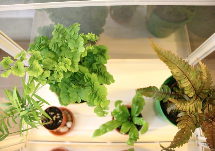 my-mini-fern-greenhouse