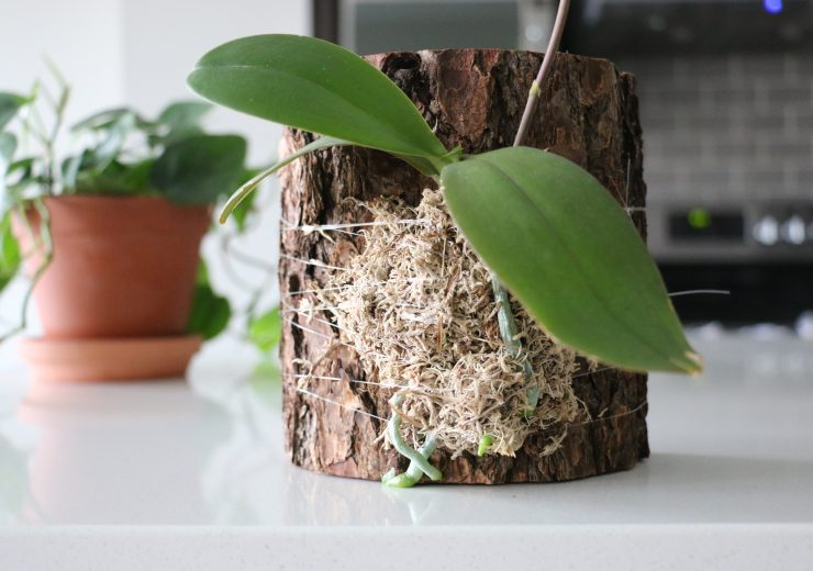 mounting-an-orchid