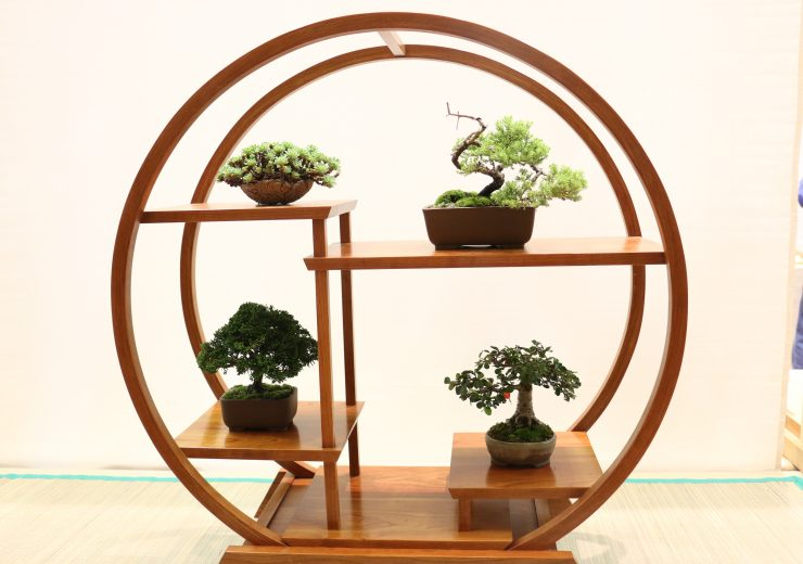 bonsai-fever