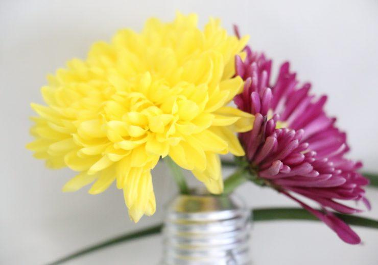 ujbplants-and-flowers