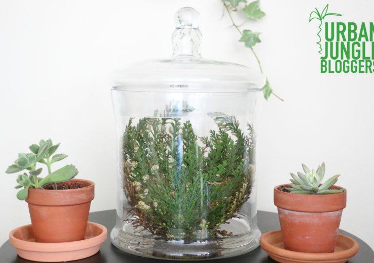 the-resurrection-plant
