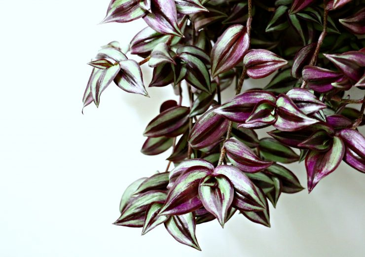 a-super-easy-houseplant