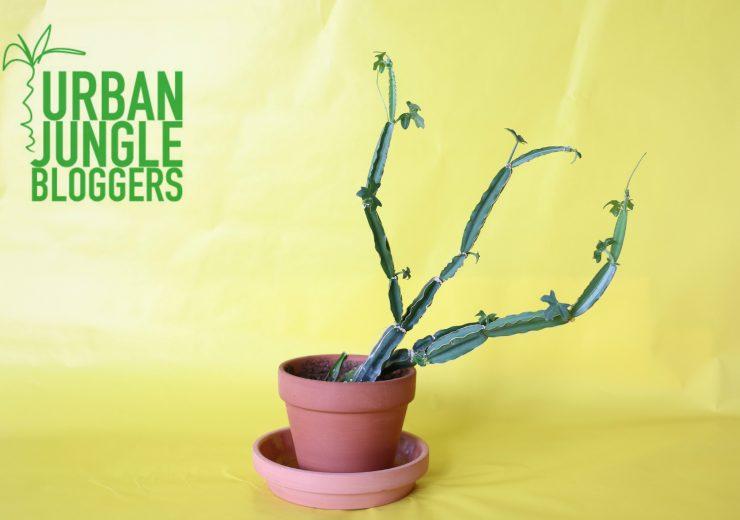 make-your-plant-pop