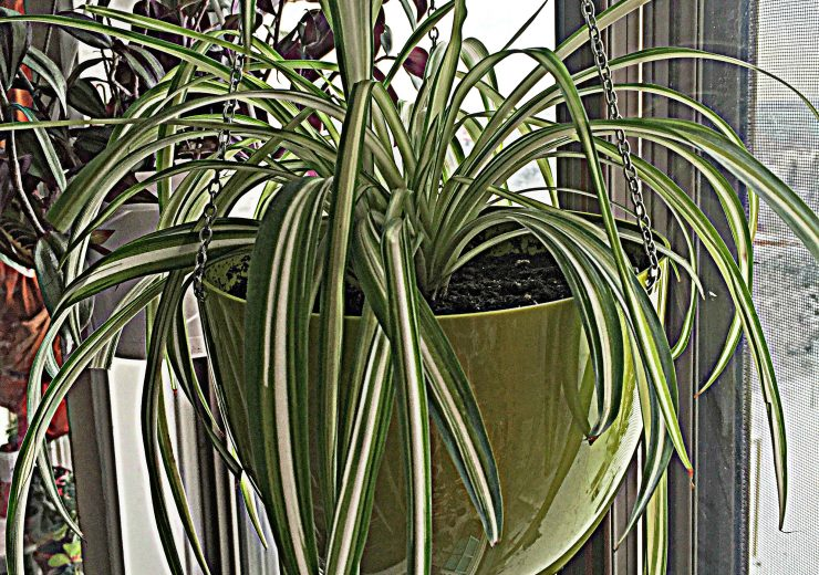 6-easy-low-light-plants-for-beginners